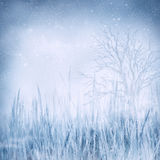 Winter frozen landscape Stock Image