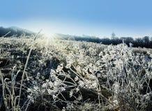 Winter frozen plant and sunrise Stock Photo
