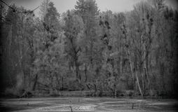 Black and white photo of the park and the frozen pond. Winter frozen pond and an old park on a black and white photo royalty free stock images
