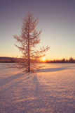 Winter frozen sunrise landscape vintage style Stock Photos