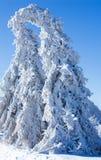 Winter - frozen tree royalty free stock photos
