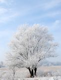 Winter frozen tree Royalty Free Stock Photography