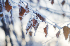 Winter frozen tree branches Royalty Free Stock Photos