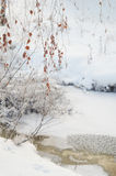 Winter frozen tree branches Royalty Free Stock Images