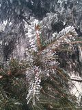 Winter. Frozen tree in cold winter royalty free stock photos
