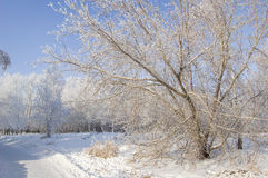Winter frozen trees Royalty Free Stock Photography