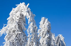 Winter - frozen trees Stock Photo