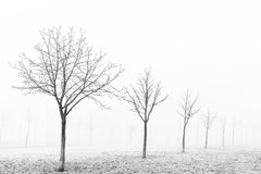 Winter frozen trees on a foggy landscape park Stock Photography