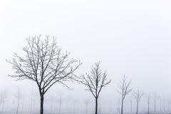 Winter frozen trees on a foggy landscape park Royalty Free Stock Photography