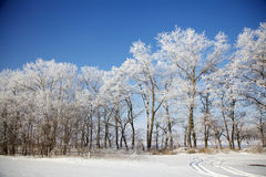 Winter frozen trees in meadow. Full of snow Royalty Free Stock Photography