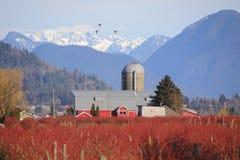 Winter-Frucht und Berry Farm Stockfoto