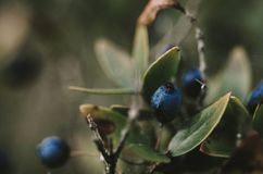 Winter fruits with blurry bokeh royalty free stock photography