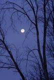 Winter Full Moon Royalty Free Stock Photography