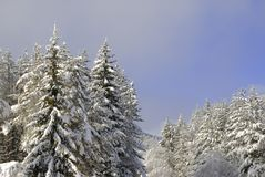 Winter fun. Winter view from ski resort Royalty Free Stock Photo