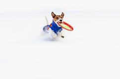 Winter fun at snow field with dog and toy Stock Photos