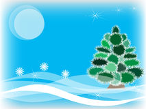 Winter fur-tree Stock Photo