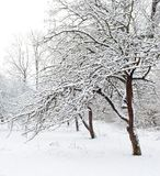 Winter garden. A winter garden, just after the snowfall royalty free stock images