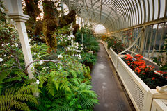 Winter garden. Photo was taken in winter garden with colourful flowers and green plants stock image