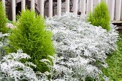 Winter Garden Royalty Free Stock Photography