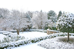 Winter garden Royalty Free Stock Photo