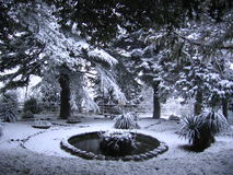 Winter garden. Covered in snow Stock Photography