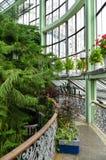 Winter garden, greenhouse, Kretinga, Lithuania. Indoor view of Kretinga botanical garden, Lithuania stock photo