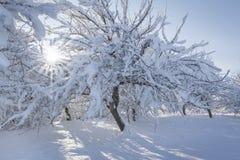 Winter garden Stock Photos
