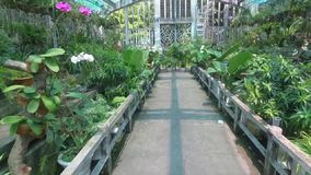 Winter garden. With orchids and other tropical plants stock video