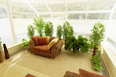 Winter garden with plants_3 Stock Image