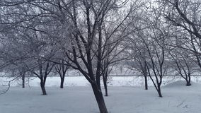 Winter garden. Snow on trees. Royalty Free Stock Photos