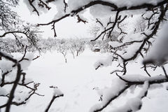 Winter garden. And tree branches framing the image royalty free stock photography