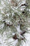 Winter. Gefrieren. Lizenzfreie Stockfotografie