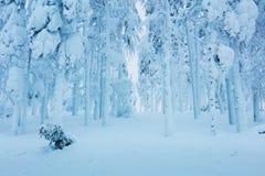 Winter gefrorene Bäume im Wald - viel Schnee nach Blizzard Stockfotos