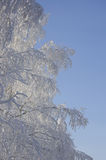 Winter gefrorener Baum Stockbilder
