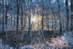 Winter gefrorener Wald Lizenzfreie Stockfotos