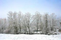 Winter gefrorener Waldhintergrund. Lizenzfreie Stockfotos