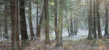 Winter gemischter Wald vor Sonnenuntergang Lizenzfreie Stockfotografie