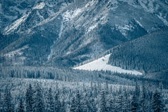 Winter glade royalty free stock image