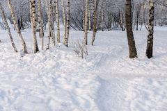 Winter glade with snowdrifts and a footpath in the wood Stock Image