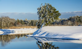 Winter Glory. Winter scene following a snowstorm Royalty Free Stock Photos