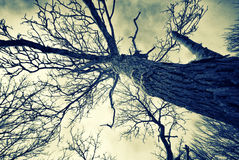 Winter Gnarled Tree - Retro, Faded Royalty Free Stock Photography