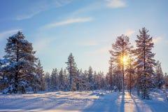Winter Golden Sundown - northern nature Stock Image