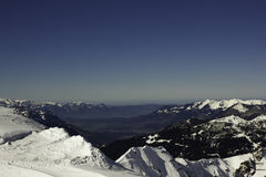 Winter-Grün Lizenzfreies Stockfoto