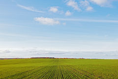 Winter grain crops green field and clouds blue sky Stock Photo