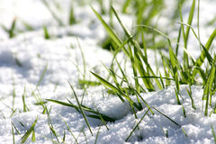 Winter grass Stock Images