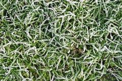 Winter grass. Frozen grass texture Stock Photos