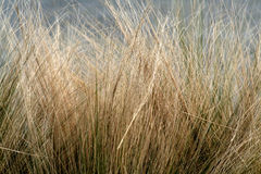 Winter grass royalty free stock photo