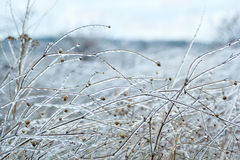 Winter grass covered with ice Royalty Free Stock Photography