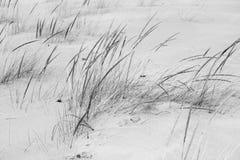 Winter Grass Stock Photo
