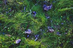 Winter Grass and Leaves. Colorful Winter Grass and Leaves in December Stock Image